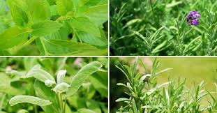 Plantas medicinales, imagen tomada de internet