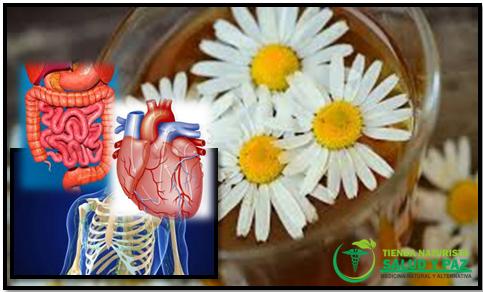 3 beneficios de las plantas medicinales