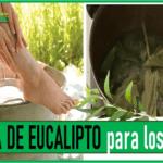 el agua de eucalipto es buena para los pies