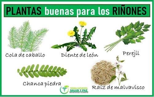 hierbas medicinales para limpiar los riñones