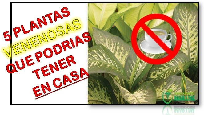 5 plantas venenosas caseras